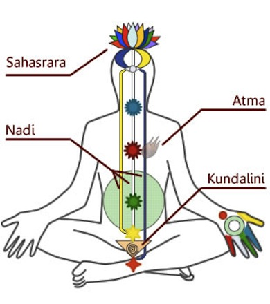 Diagram of chakras and Kundalini in a human being - Wikicommons